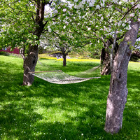 hammock under the apple trees